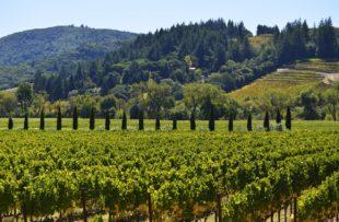 sonoma vineyard wine