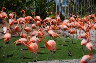 zoo-animals-948051_960_720